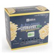 boite-a-champignons-pleurotes-jaunes-2