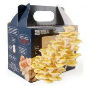boite-a-champignons-pleurotes-jaunes-3